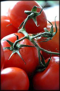 Soupe-froide-de-tomates-5a.jpg