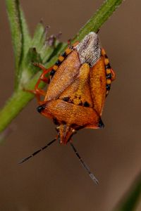insectes2679