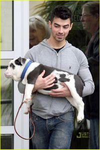 joe-jonas-winston-pickup-02