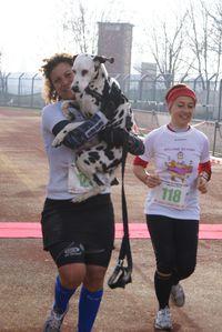Maratona del Lamone 2014. Podisti fanatici e ignoranti affermano: Ti fai trainare dal cane (Alina Losurdo)