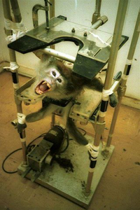 http://img.over-blog.com/200x300/5/23/68/10/DOSSIER-3-NOVEMBRE-2012/singe-vivisection.png