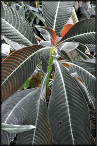 Serres-Tropicales-18a.jpg