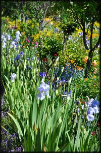 Giverny---Le-Jardin-de-Claude-Monet-10a.jpg