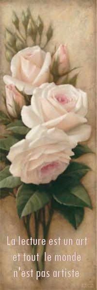 mp roses Nicole