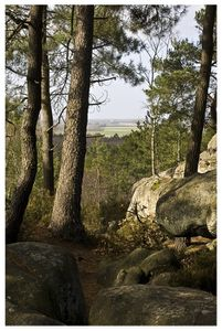 2247-foret-fontainebleau.jpg