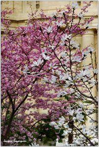 Le Petit Palais jardin 3