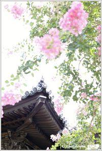 Japon, Kyoto 0073