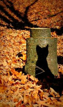 chat-ombre-automne-fb-sept-14.jpg
