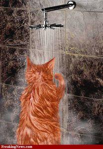 Shower--11547