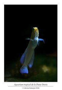 Aquarium tropical de la porte dorée par Olivier R-copie-7