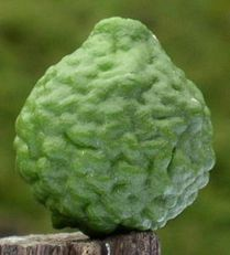 lime-kaffir.jpg