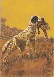 22-chien chasse-2010