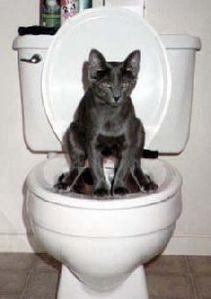 viter les pipi de chats - Trucs et Astuces Maison
