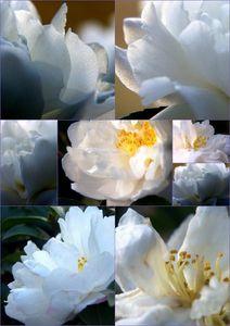 2010-02-13.2 Fleurs[1]
