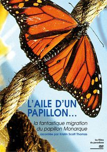 papillon-copie-1.jpg