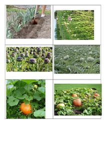 photolegjardin2