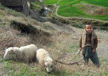 berger jeune Pakistan © CHAND KHAN AFP Getty Images