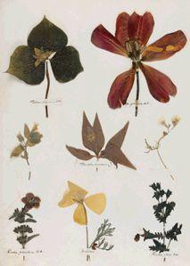 Dickinson herbarium