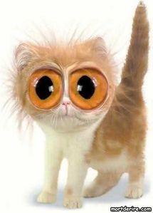 chat-qui-fait-les-gros-yeux.jpg