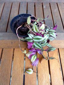 plantes-interieur-bouture3