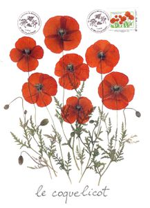 COQUELICOTS-CONCOURS-MILLY-LA-FORET-copie.jpg