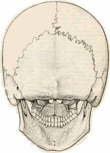 Crâne post