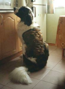 chien de guarde Moscou 04