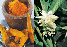 turmeric-june-0822.jpg