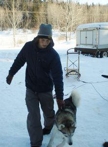 chiens de traineau 056