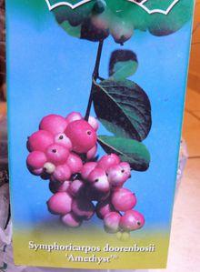 etiquette-symphorine-amethyst---promesse-de-fleurs.jpg