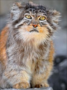 inside manul sitting up