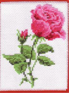 rose anni