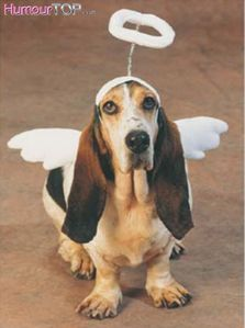 Funny dog angel