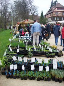 Botanischer-Garten-2014-04-05-003.JPG