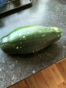 courgette-entiere.JPG