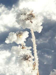cristaux-neige.jpg