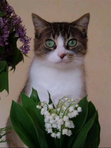 chat-muguet-1353578c83.png