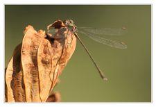 Insectes Libellule © Olivier Roberjot 01