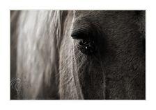 Cheval © Olivier Roberjot 09