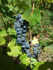 Cabernets Septembre 2010