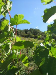 Clos des Cdres Septembre 2010