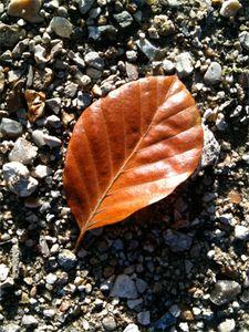 feuille-automne.jpg