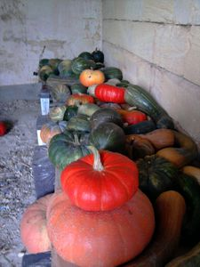 Courge5