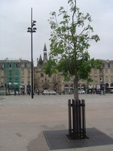 Bordeaux-2010.05.29 155