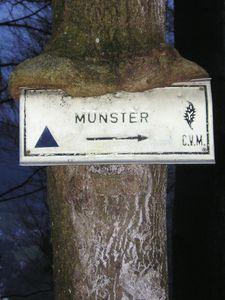 2008-01-16 - Munster - b