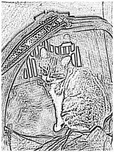 chatonficelle0050