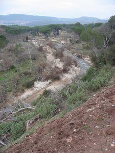 2011-02-24 Forêt de Palayson-017
