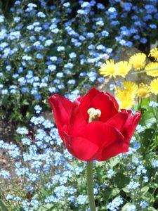 fleur mimipalitaf onze