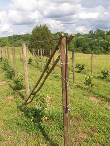 Andalucia vineyard (14)