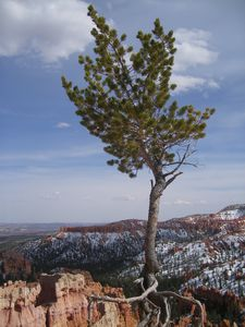 195Bryce-Canyon-National-Park--37-.JPG